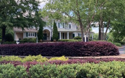 Reduce Energy Costs with Landscape Shading